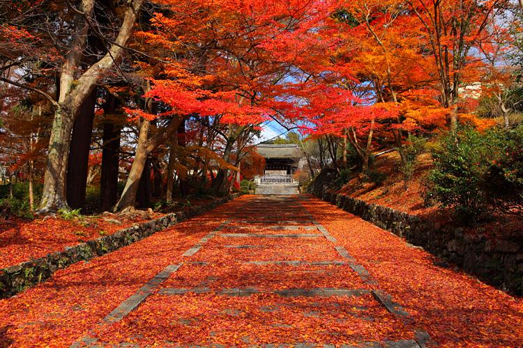京都の紅葉めぐりなら奥丹波を彩る紅葉の名所3つ | …