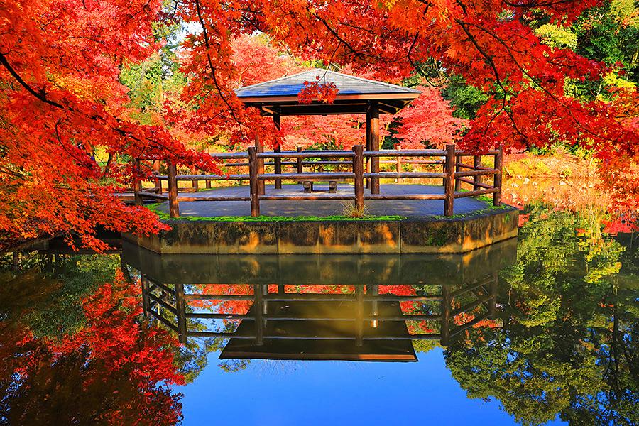 植物園 京都
