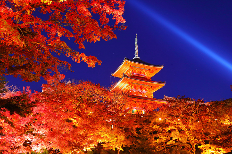 京都 紅葉 ライトアップ